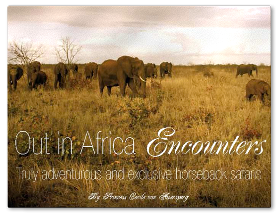 Out in Africa encounters